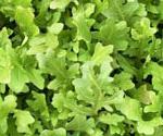 arugula, an aphrodisiac food