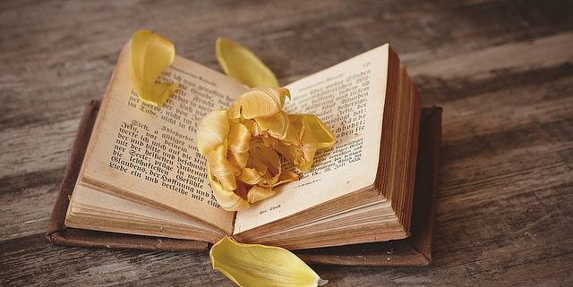 open book with rose petals on top