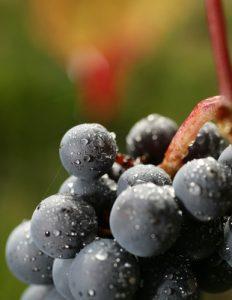Beaujolais wine bargains