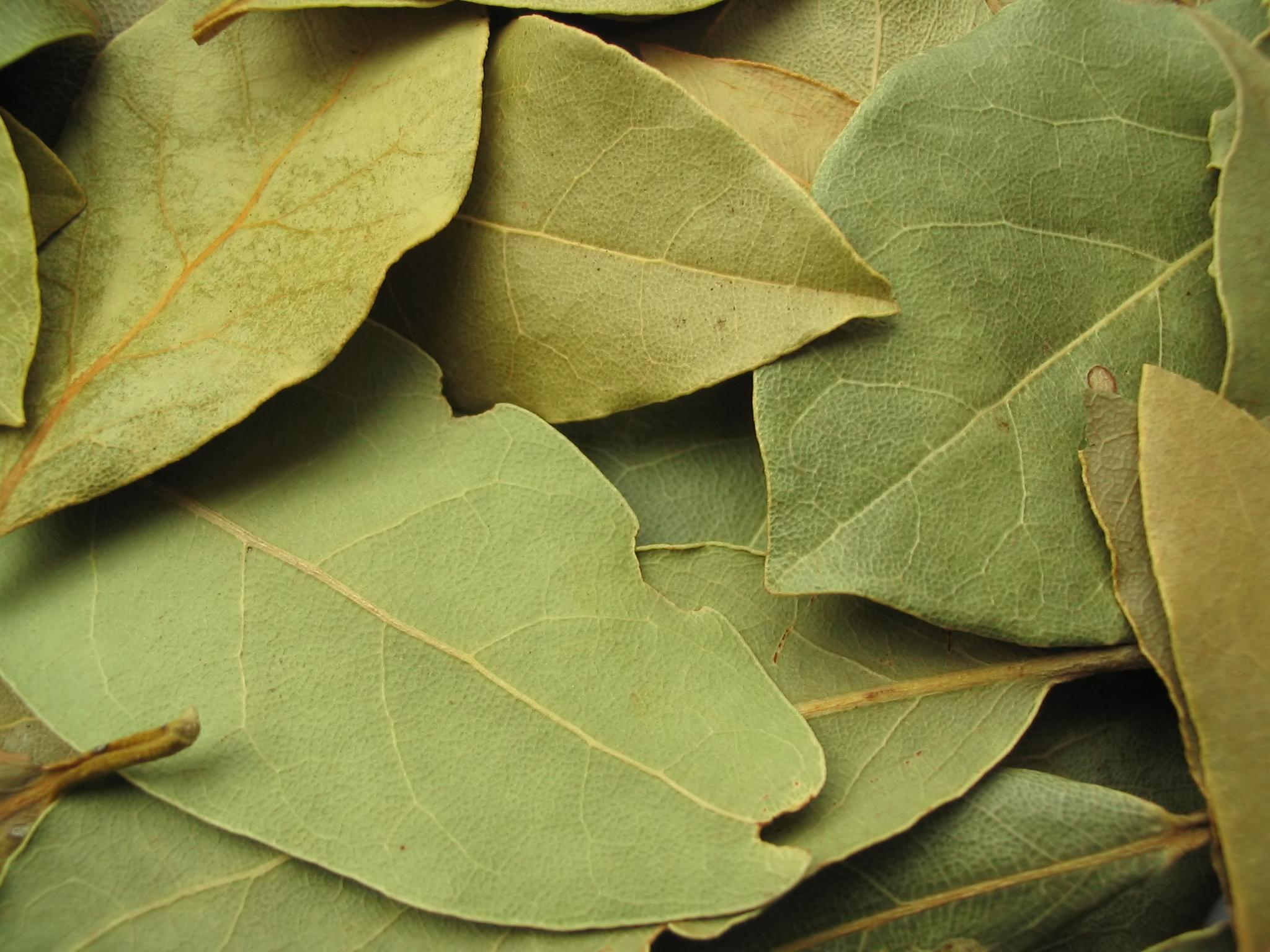 bay leaf--a surprising aphrodisiac