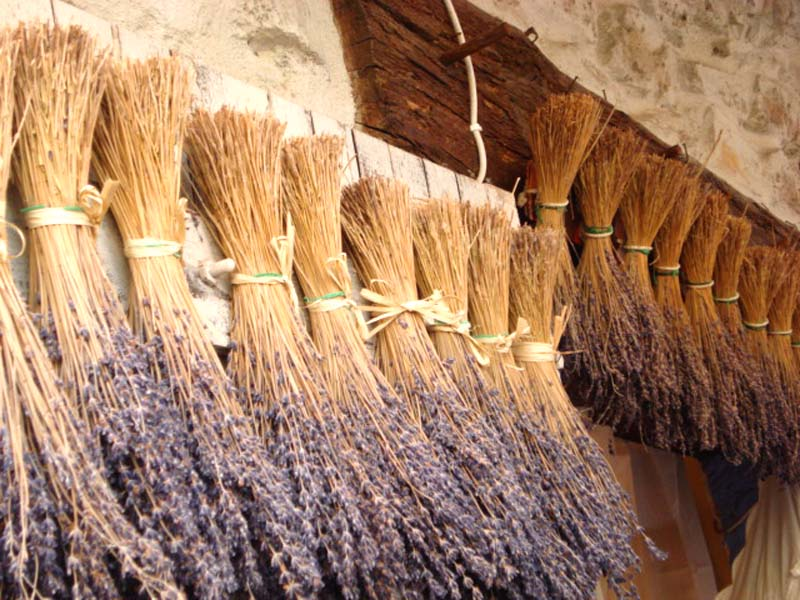 lavender for romance