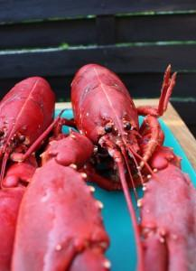 lobster - an aphrodisiac of luxury