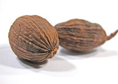 closeup of whole nutmeg to illustrate nutmeg benefits