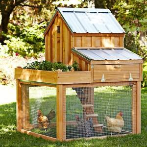 Williams Sonoma Chicken Coop