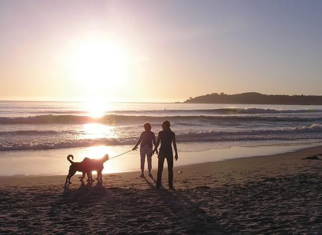 Carmel Dog-Friendly Beaches