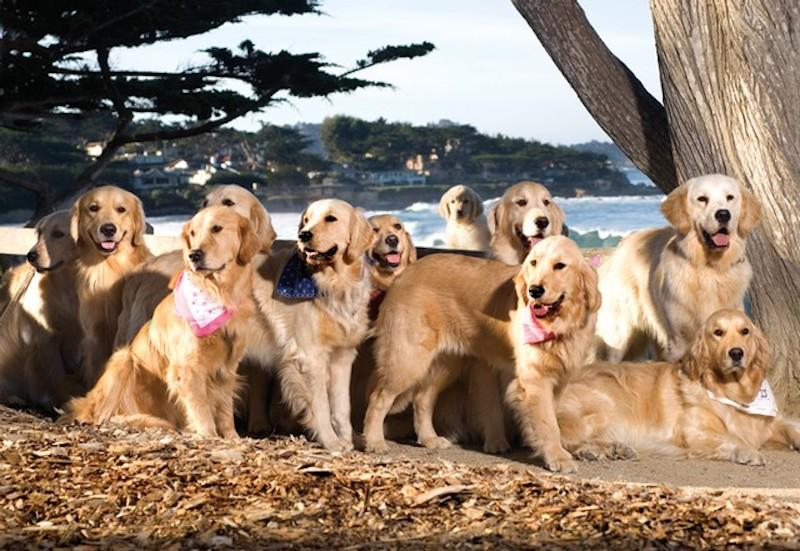 Dogs playing on Carmel Beach