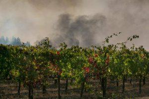 Napa and Sonoma Fires 2017 (photo by George Rose)