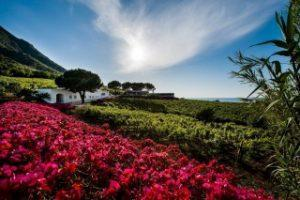 Capofaro Resort Salina, Italy