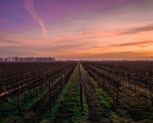 Gifts from the Wine Country for Wildfire Relief