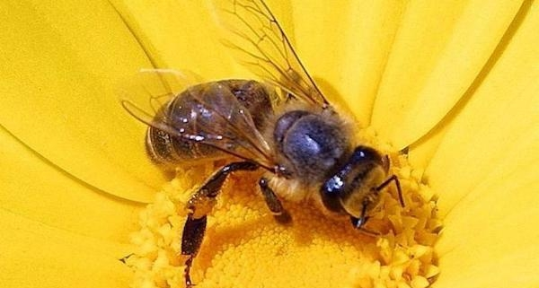 Show some respect for honey bees