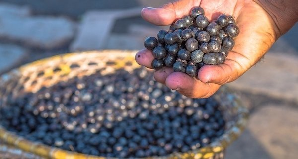 closeup of acai berry in a basket with man's hand holding a cluster