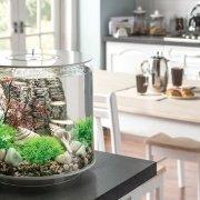 biOrb Tube--why you need this fish tank