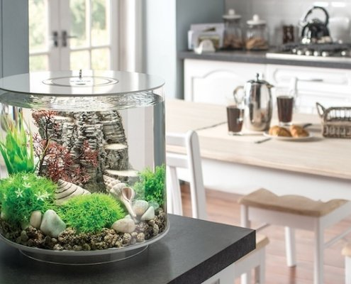 biOrb Tube--why you need this fish tank