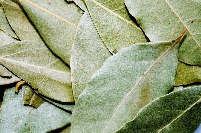 Bay leaf és prostatitis Zoz prostatitis