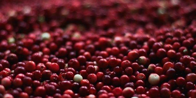 cranberry closeup
