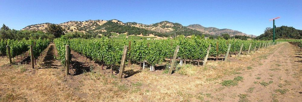 The vineyards of Yountville