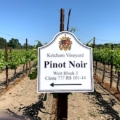 A row of Ketcham Estate Pinot Noir Vines in Springtime