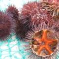 closeup of sea urchin