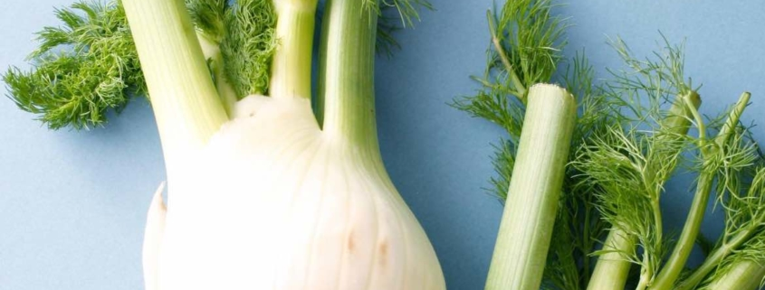 two fennel bulbs on a blue background