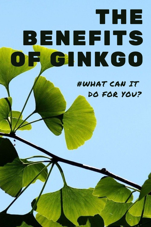 Ginkgo biloba benefits graphic