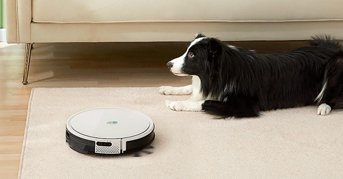 Yeeli robo vacuum and a dog watching it run