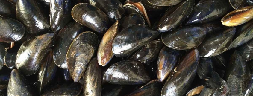 a pile of mussels