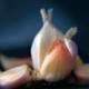 closeup of garlic on a dark blue background